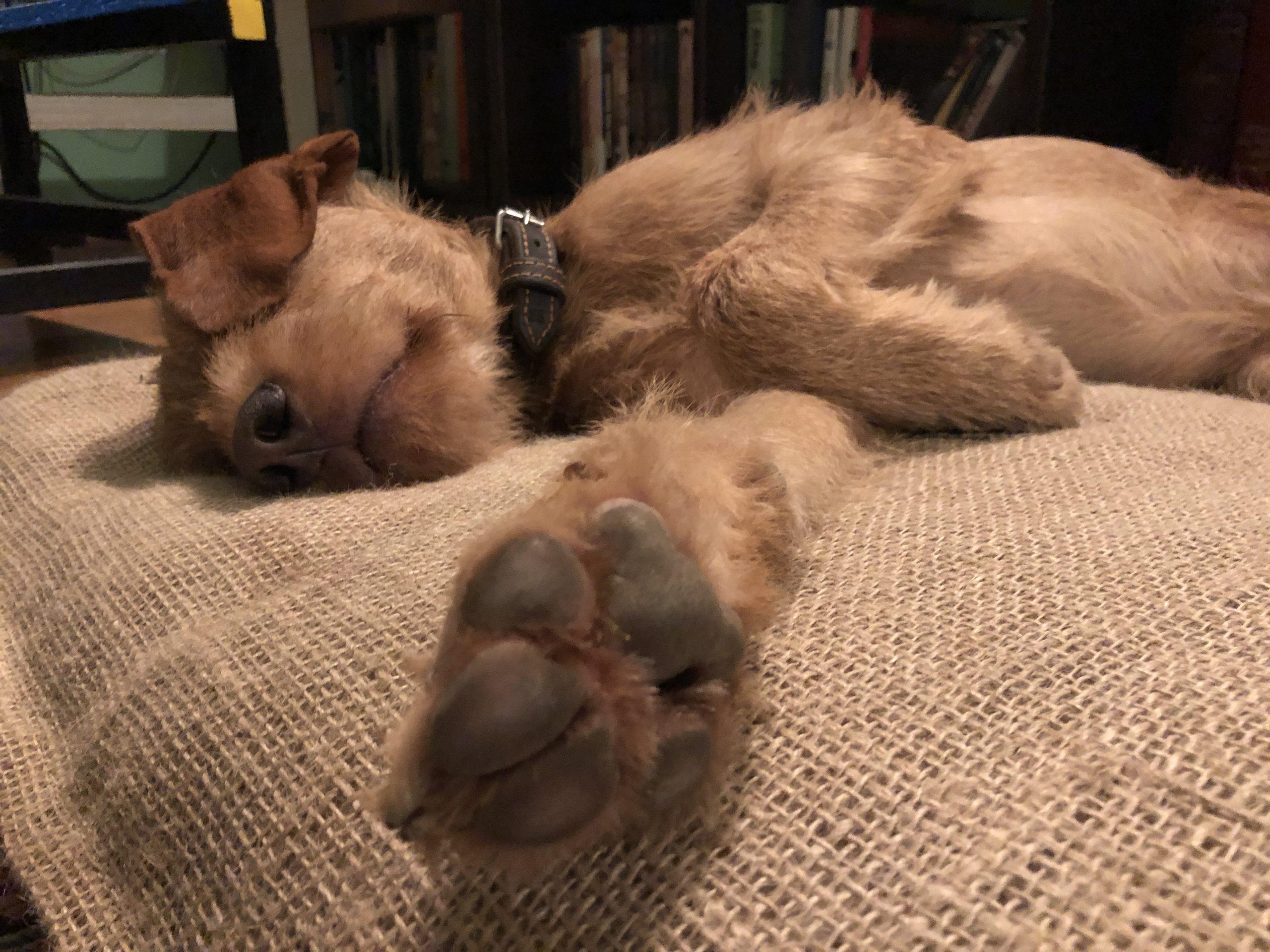 hundewelpen-natürlich-gebettet